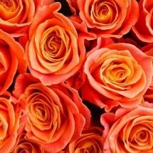 flower-گل (82)