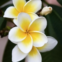 flower-گل (84)