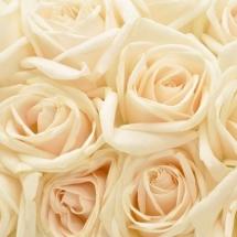 flower-گل (85)