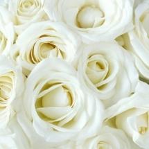 flower-گل (87)