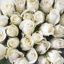 flower-گل (88)