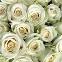flower-گل (89)