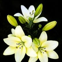 flower-گل (96)