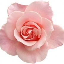 flower-گل (97)