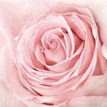flower-گل (98)