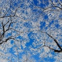 nature-طبیعت (141)