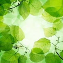nature-طبیعت (149)