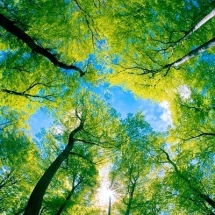 nature-طبیعت (152)