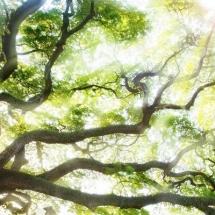 nature-طبیعت (175)