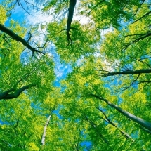 nature-طبیعت (187)