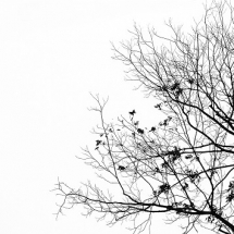 nature-طبیعت (244)