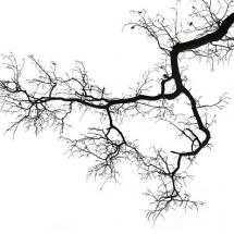nature-طبیعت (245)