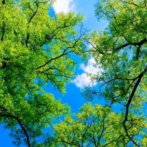 nature-طبیعت (257)