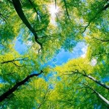 nature-طبیعت (267)