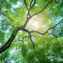nature-طبیعت (292)