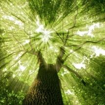 nature-طبیعت (293)