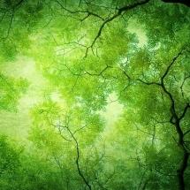 nature-طبیعت (308)