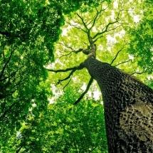 nature-طبیعت (321)