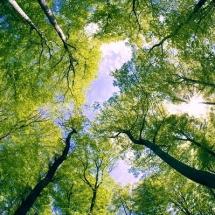 nature-طبیعت (328)