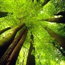 nature-طبیعت (329)