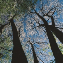 nature-طبیعت (330)