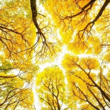 nature-طبیعت (348)