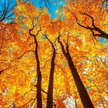 nature-طبیعت (351)