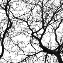 nature-طبیعت (382)