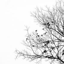 nature-طبیعت (383)