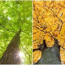 nature-طبیعت (405)