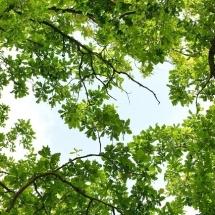 nature-طبیعت (407)