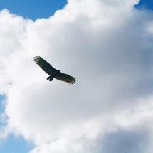 sky-آسمان (134)