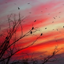 sky-آسمان (187)
