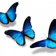 butterfly-011.d4c