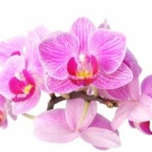 flowers-021.d4c
