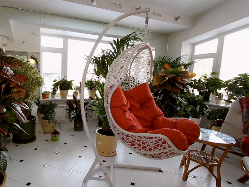 گل و گیاه در خانه